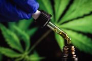 GPs warned against involvement in 'Cancard' cannabis ID scheme